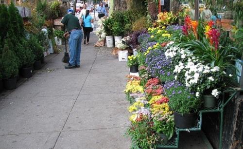 flower-district-new-york